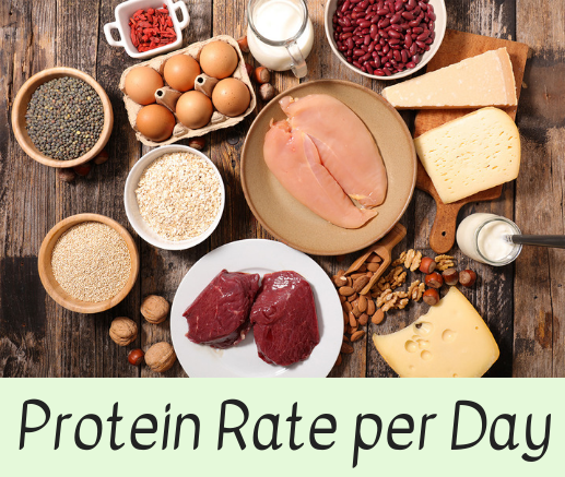 Protein Rate per Day